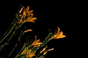 Flowering Golds II