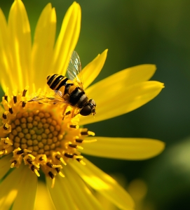 It's a Bee's Life III
