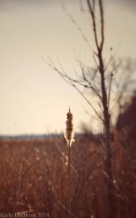 Winter Remnants