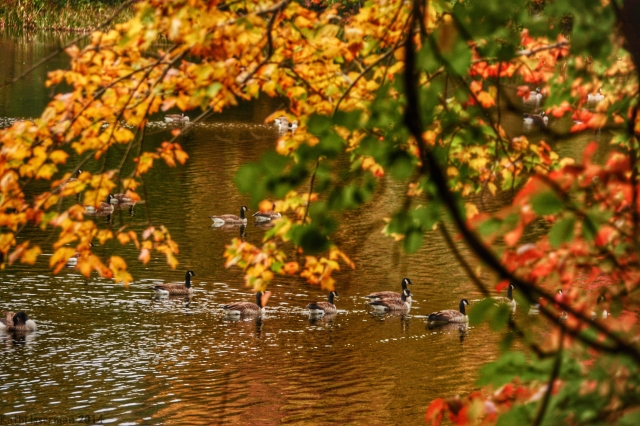 Autumn Geese Abstract