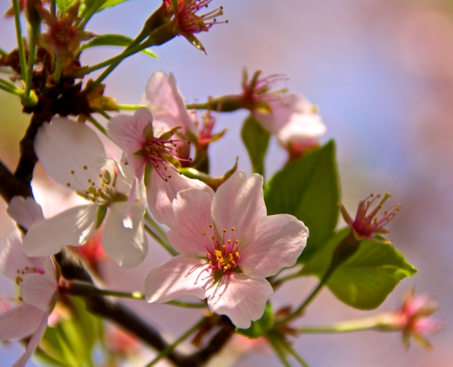 Focus on the Blossom
