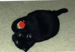Our Boy, Malach,  as a kitten