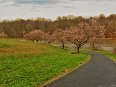 December Blossoms