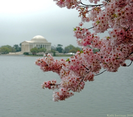 A Capital Cherry Blossom II